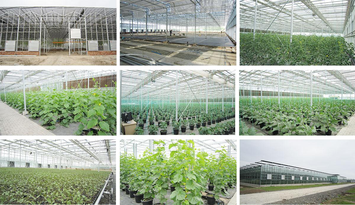 Kunyu greenhouse benefits Xinjiang