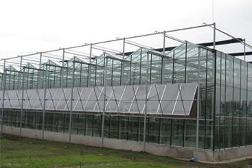 Greenhouse Glass