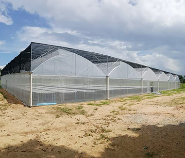 Congratulation! The greenhouse in Qatar which built by Kunyu greenhouse company is completed by May 10th, 2020.