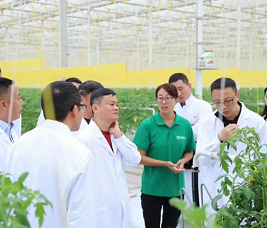 Jack Ma visited agricultural greenhouses and said, the current modern agricultural industry is like the Internet in the early 21st century.