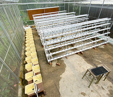 Kunyu Hydroponic System Project In Singapore