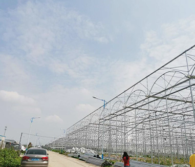 Kunyu team visit the center of orchid greenhouses