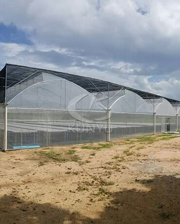 Film Greenhouse in Qatar 2019