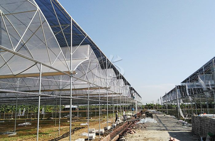Film Greenhouse in Qatar 2019