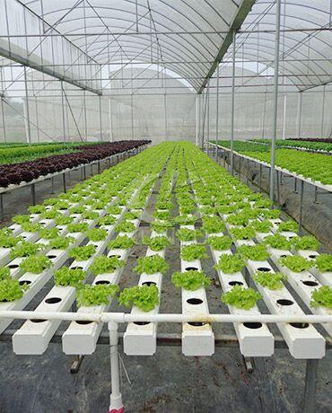 Hydroponic Greenhouse