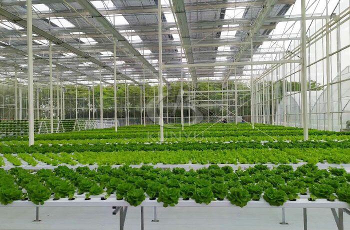 Multi-span Greenhouse in Brunei 2020