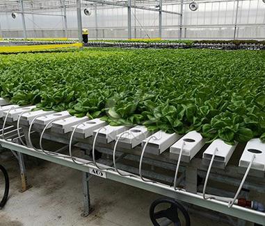 Do You Need a Greenhouse?