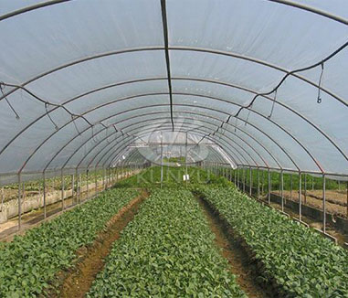 Differences between Hoop Houses and Greenhouses
