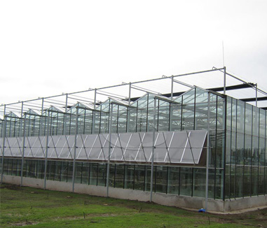 Greenhouse Glass Options - Glass or Polycarbonate